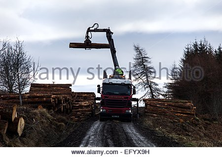 Traquair Wood, Innerleithen, Peebles, Scotland, UK. 12th February, 2015. Timber being loaded by a crane onto a HGV - Stock Photo