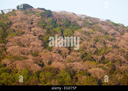 Morning sunlight on a forested hill in Soberania national park, Republic of Panama. - Stock Photo