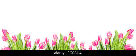 Pink tulips on white background, banner for website - Stock Photo
