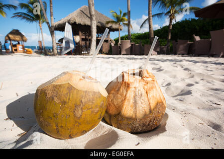 DOMINICAN REPUBLIC. Fresh coconut water drinks in the sand on Punta Cana beach. 2015. - Stock Photo