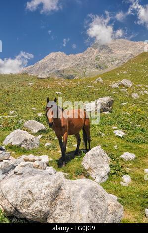 Horse in scenic mountain range in Kyrgyzstan - Stock Photo