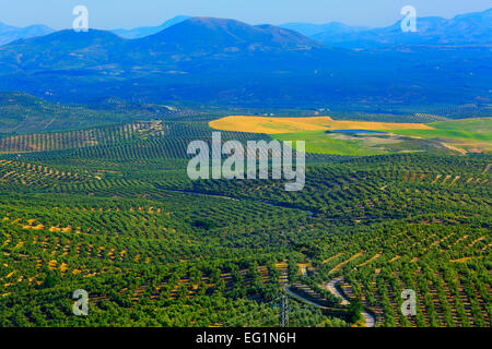 Landscape, olive groves from the Plaza Santa Lucia, Ubeda, Andalusia, Spain - Stock Photo