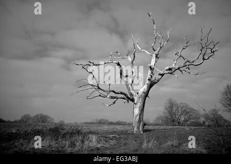 Dog standing behind dead tree on Hampstead Heath - Stock Photo