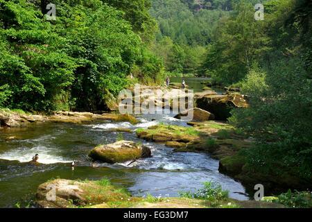 River Coquet near Rothbury - Stock Photo