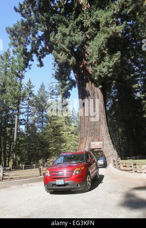 Drive-Thru Tree Park in Leggett - Mendocino County, USA Stock ...