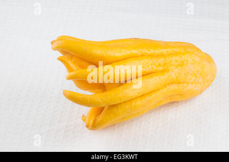 Buddha's Hand fruit (Citrus medica sarcodactylis) - Stock Photo