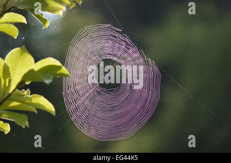 Condensed dew water drops caught suspended on fine strands of spider web with light rays being broken up and dispersed - Stock Photo