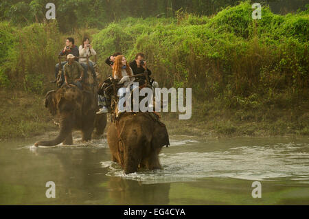 Tourists riding on domestic Indian elephant (Elephas maximus) crossing Narayani River in the dawn mist during wildlife - Stock Photo