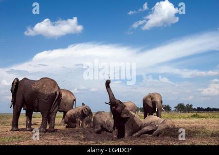 African elephants (Loxodonta africana) wallowing in waterhole. Masai Mara National Reserve Kenya. Taken remote wide - Stock Photo