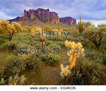 Jumping cholla [Opuntia fulgida],  Superstition Mountains from Lost Dutchman State Park, Arizona. - Stock Photo