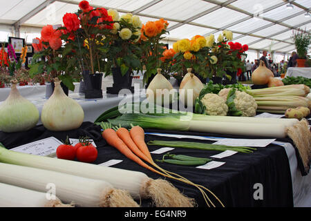 Vegetables at Southport Flower Show / Victoria Park / Southport / Merseyside / UK - Stock Photo