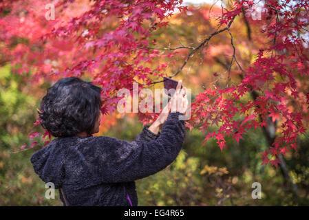 KYOTO, JAPAN - November, 18, 2014: Young japanese girl admiring maple trees, momiji season in Kyoto - Stock Photo