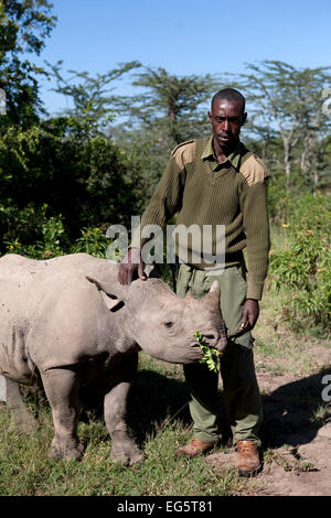 Mohamed Doyo, a keeper and employee at Ol Pejeta conservancy feeds a Southern White Rhino at the Ol Pejeta Conservancy - Stock Photo