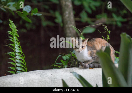 A cat perched on a stone wall. - Stock Photo