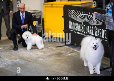 National Dog Show Non Sporting Group American Eskimo Dog