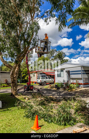 Mechanical tree surgery using chainsaw and crane lift. - Stock Photo