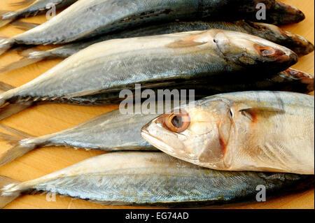 salted mackerel fish on wooden board - Stock Photo