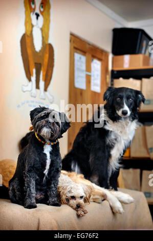 Dog Kennels Llanelli