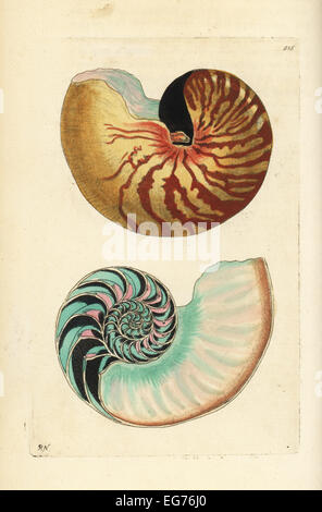 Emperor nautilus shell and section through shell showing chambers, Nautilus pompilius (Great nautilus, Nautilus - Stock Photo