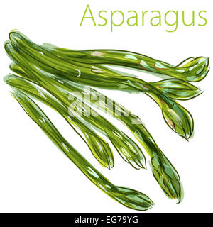 An image of a watercolor asparagus painting. - Stock Photo