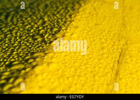 Water beading up on a yellow plastic surface. - Stock Photo