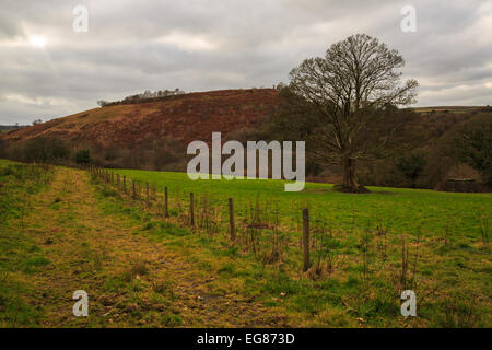 a view looking up towards the ironage hillfort of cadsonbury near Callington in East Cornwall - Stock Photo