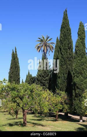 Spain, Andalusia, Seville, La Cartuja, parc, garden, trees, - Stock Photo