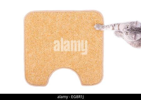 gray cat on the orange carpet - Stock Photo