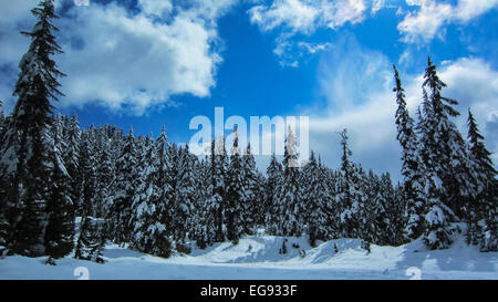 The snow hangs heavy on the branches of the fir trees at a ski resort in British Columbia on a warm sunny winter - Stock Photo