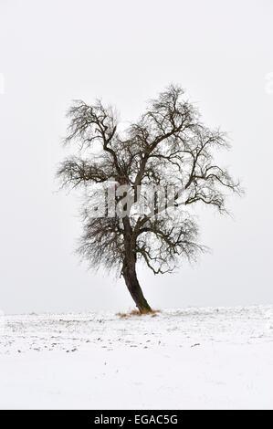 Single tree silhouetted against cloudy winter sky, Mazovia Region, Poland - Stock Photo