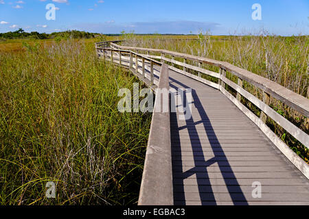 Everglades National Park boardwalk on Anhinga Trail at Royal Palm. - Stock Photo