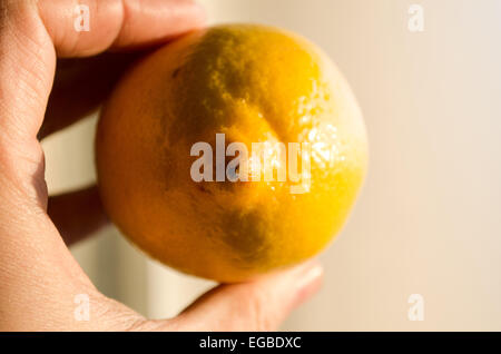 Lemon in woman hands - Stock Photo