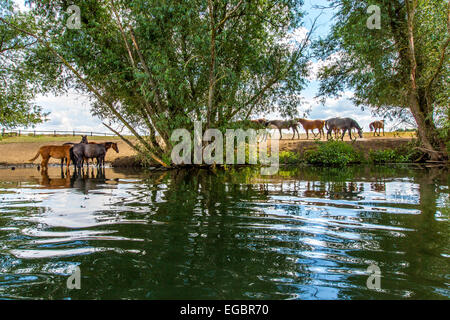 Horse pasture at river Ruhr, Schwerte, Germany - Stock Photo
