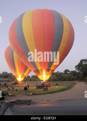 It is early morning in Little Governors camp and two hot air balloons are being prepared for lift off. - Stock Photo