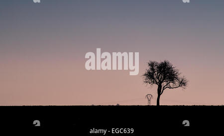 Tree, Backgrounds, Unhygienic, Retro Revival, Loneliness, Solitude, Photography, Winter, Nature, Frost, Scenics, - Stock Photo