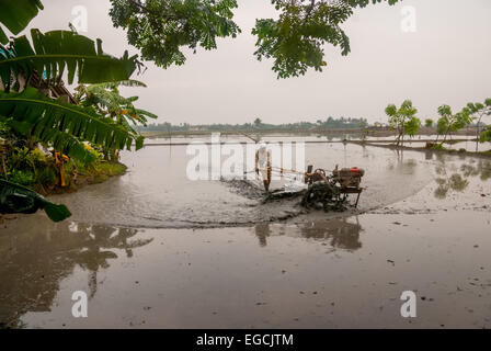 Asian farmer plows rice field before sowing. - Stock Photo