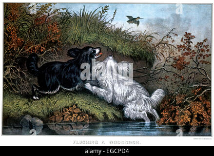 CURRIER AND IVES LITHOGRAPH TWO SPANIEL DOGS FLUSHING A WOODCOCK WILD BIRD HUNTING - Stock Photo