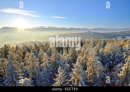 Sunrise over the Bernese Alps, view from Chuderhüsi over snow-covered fir trees in the Emmental region, Bernese - Stock Photo