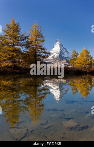 Views of the Matterhorn and its reflection in Lake Grindji with larches in autumn, Zermatt, Valais, Switzerland - Stock Photo