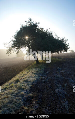 Apple trees on a small strip of pasture covered with frost between ploughed fields and hills with forest in the - Stock Photo