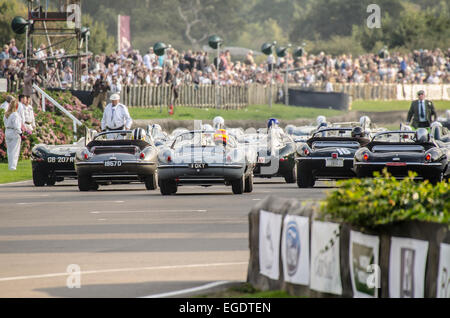 Illustrated is a unique grid for the Lavant Cup at the Goodwood Revival 2014, consisting entirely of Jaguar D-Types - Stock Photo