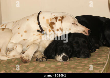 3 dogs sleeping. - Stock Photo