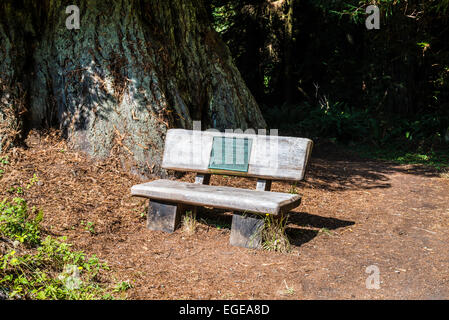 Public wooden bench memorial. Prairie Creek Redwoods State Park, California, United States. - Stock Photo
