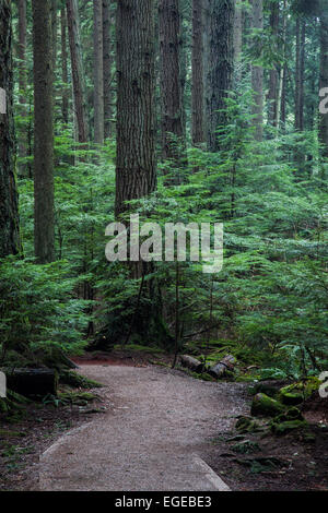 Hiking trail through a dense temperate rain forest near Vancouver, Canada - Stock Photo