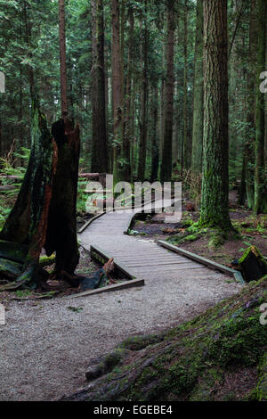 Elevated walkway through an environmentally sensitive area in a temperate rain forest - Stock Photo