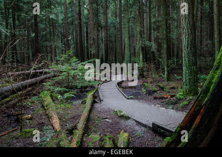 An elevated trail through a marshy area of a temperate rain forest near Vancouver - Stock Photo
