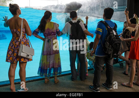 A group of people taking pictures of a polar bear at the Singapore Zoo - Stock Photo