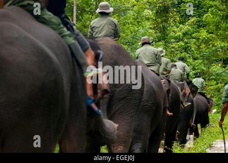 Elephant patrol in Gunung Leuser National Park, Sumatra, Indonesia. - Stock Photo