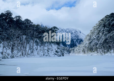 Panoramic view of dense forest under a snowy cover on the shore - Stock Photo