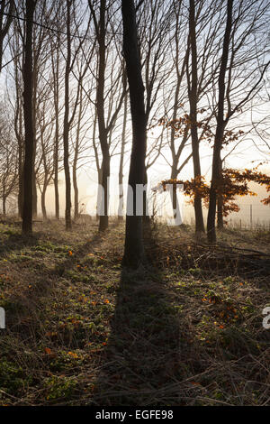 Misty wood in winter, Stow-on-the-Wold, Cotswolds, Gloucestershire, England, United Kingdom, Europe - Stock Photo